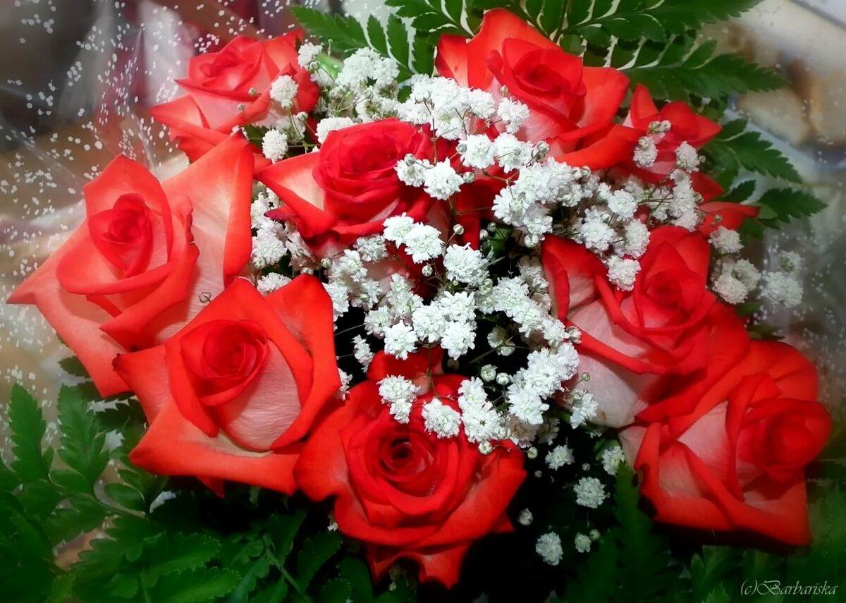 букет роз фото для любимой ярость
